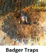 badger body traps