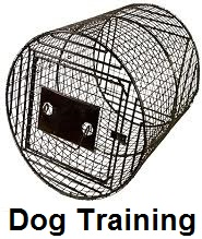 coon dog training