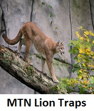 mountain lion traps